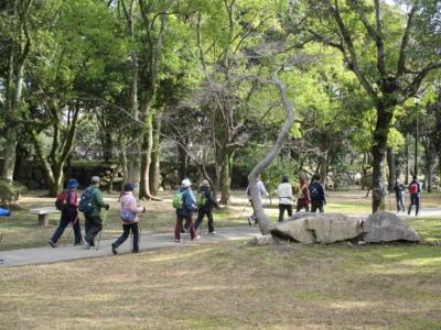 木々の中をノルディック・ウォーキング